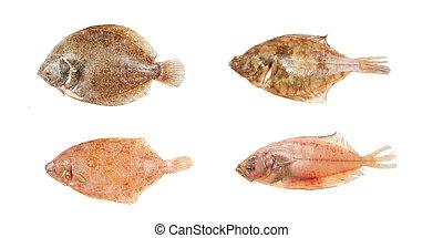 Group of flatfish - Group of four different flatfish