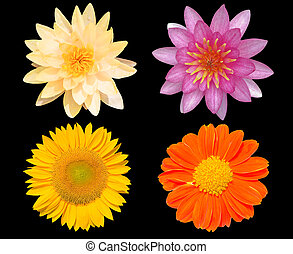 Group of flowers isolated over black background