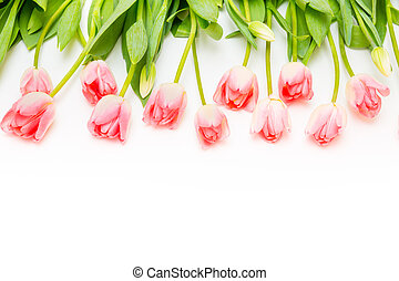 Group of flowers pink tulips on a white background.