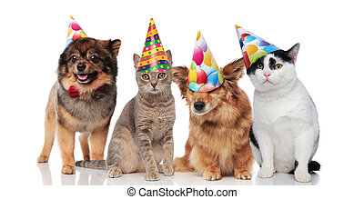 group of four funny cats and dogs with birthday hats standing and sitting on white background