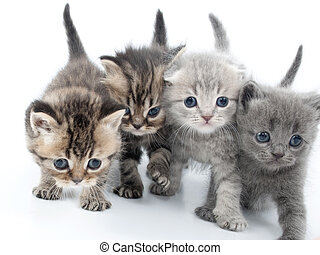 four kittens walking together - group of four kittens...