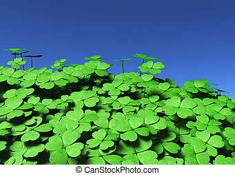Group Of Four Leaf Clovers