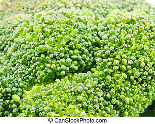 group of fresh broccoli close up