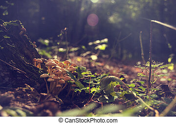 Group of fungus in forest, vintage