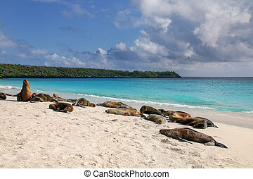 Group of Galapagos sea lions resting on sandy beach in...