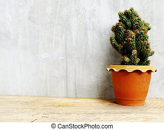 group of green cactus on wooden table still life with space copy background