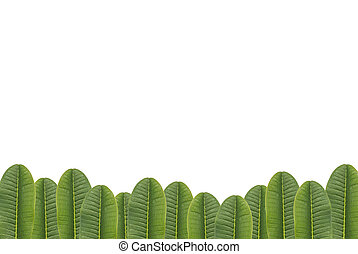 group of green leaf isolated on white background