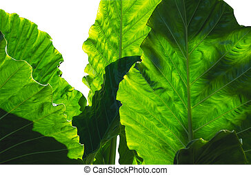 group of green leave isolated over white background.