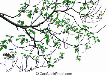 Group of green trees on white background