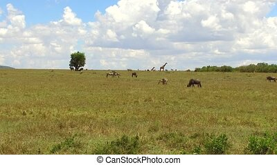 group of herbivore animals in savanna at africa - animal,...