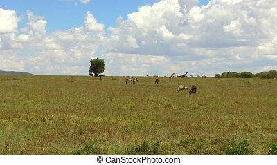group of herbivore animals in savanna at africa