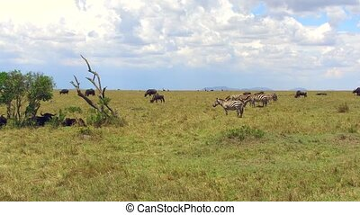 group of herbivore animals in savanna at africa