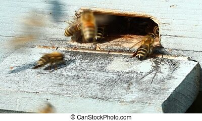 Group of honeybees