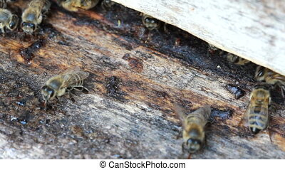Group of honeybees flying
