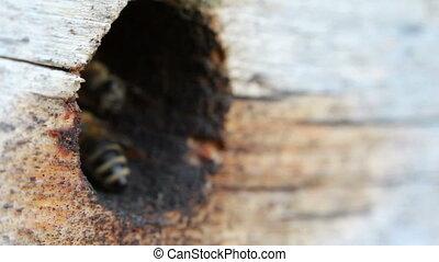 Group of honeybees flying