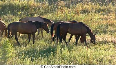 Group of horses eating grass. Animals on meadow. Ecology...
