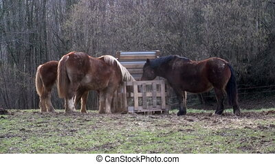 Group of horses eating