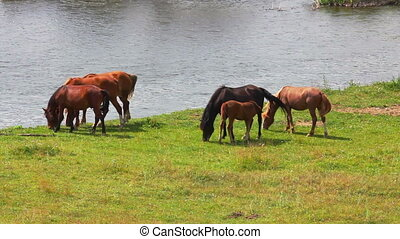 group of horses grazing on meadow near river