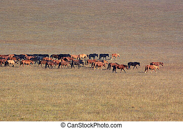 Group of horses in grassland