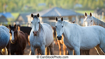 Group of horses looking at camera,