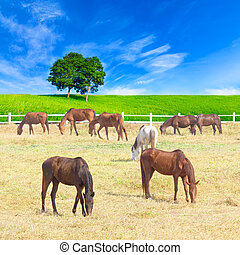 group of horses on a meadow in farm