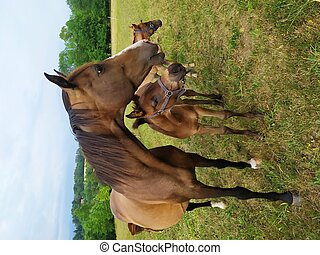 Group of Horses on meadow