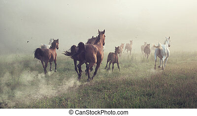 Group of horses on the meadow at the morning