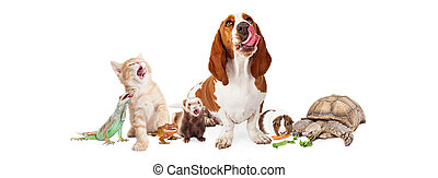 Group of Hungry Domestic Pets - Large group of hungry...