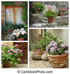 group of images with blooming hortensia plants in country garde