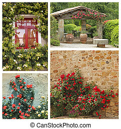 group of images with climbing roses in tuscan garden, Europe