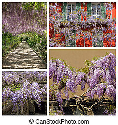 group of images with flowering wisteria