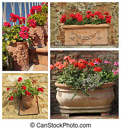 group of images with geranium plants in stylish terracotta pots