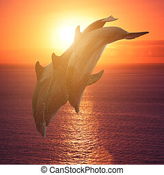group of jumping dolphins at sunset