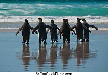 Group of King Penguins on the Beach - Rear view of seven...