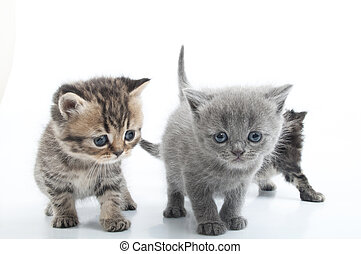 Group of kittens walking towards