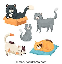 group of little cats animals