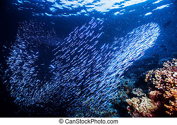 Group of little fishes under water