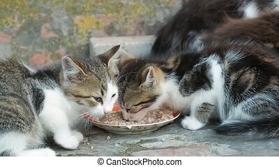 Group of little kittens eating from a saucer, close up view....