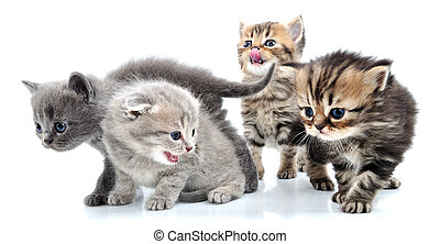 group of little kittens