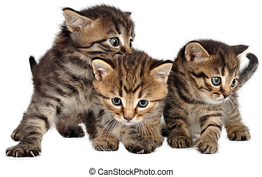 group of little kittens on white