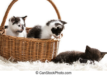 Group of little kittens sitting in a basket