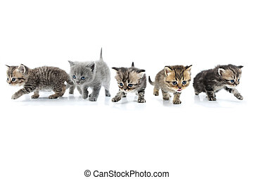 Group of little kittens walking towards together. Studio shot. Isolated over whit? background.