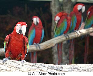 Group of macaws bird on tree.