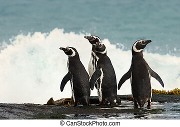 Group of Magellanic penguins standing on a shore