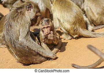 Group of monkeys.