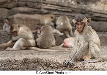 Group of monkeys in Thailand