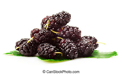 mulberries - Group of mulberries with a leaves. Isolated on ...