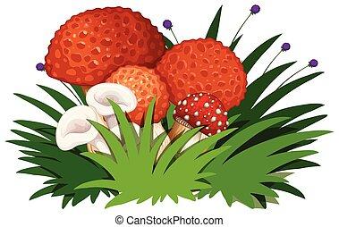 Group of mushroom on white background