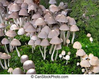 Group of mushrooms
