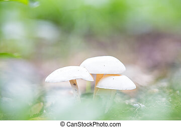 Group of mushrooms in the autumn forest